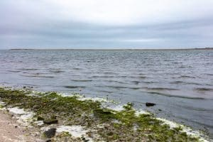 Pattersquash-Island_5I5A8616-WEB-300x200 Language Jeremy Dennis On This Site